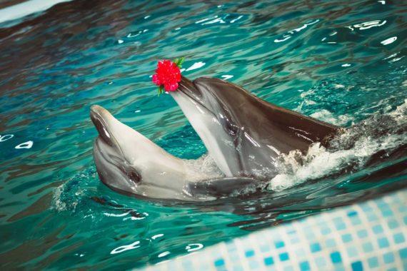 Дельфінарій Оскар - DSC_1510.jpg