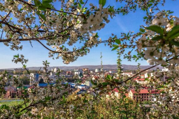 Теренкури Трускавця - truskavets-resort-flowers-01.jpg